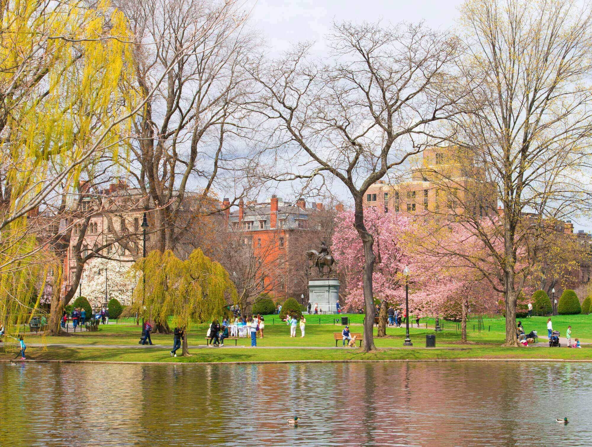 Lakeview of the Public Garden in Boston, MA with people doing various activities and a pink cherry blossom tree in the distance