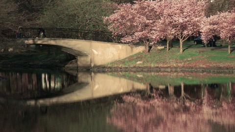boston charles river esplanade