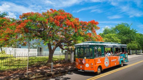 old town trolley in key west driving past key west home and tree bearing tropical flowers