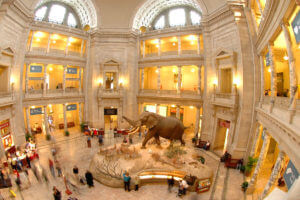 smithsonian museum natural history in Washington DC