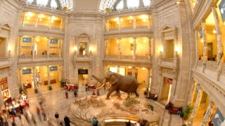 smithsonian museum natural history in Washington DC interior