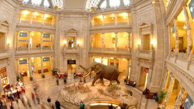 smithsonian museum natural history in Washington DC interior