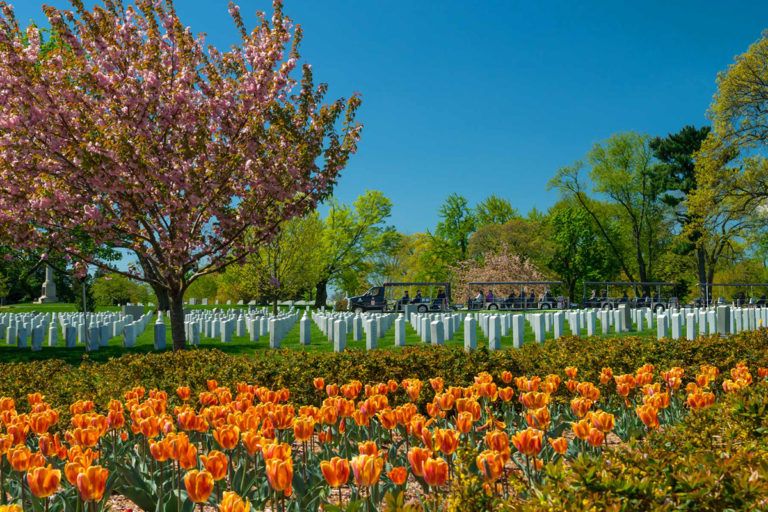 open tour vehicle at Arlington National Cemetery driving past rows of tombstones and tulips in the foreground