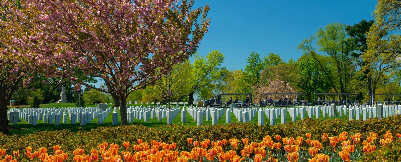 Tulips at Arlington National Cemetery