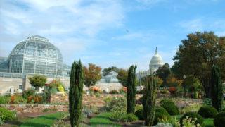 Washington DC Botanical Garden